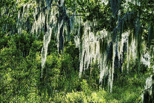 Bayou Moss by Gary  Taylor