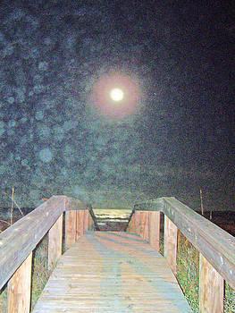 Patricia Taylor - Beach Moonlight Magic