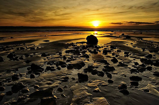 Svetlana Sewell - Beach Morning Glory
