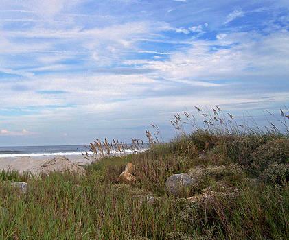 Patricia Taylor - Beach Rocks