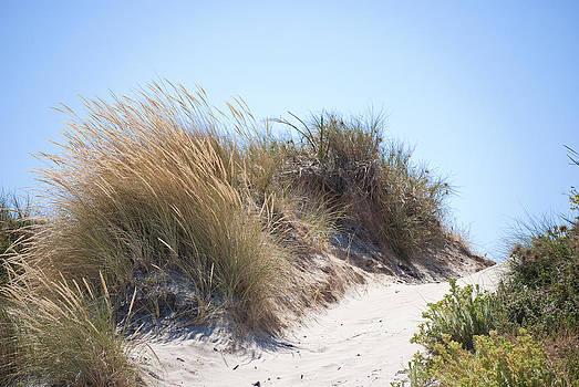 Michelle Wrighton - Beach Sand Dunes I