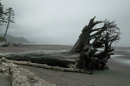 Beachscape by Michael Wyatt