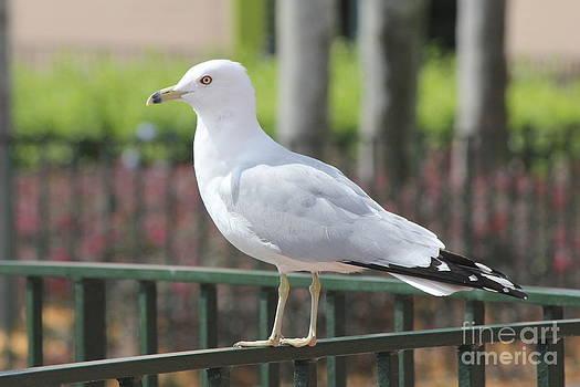 Beautiful Bird by Carrie Clarke-Hooge