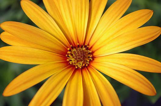 Beautiful Flower by Michael Krahl
