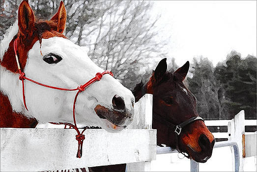 Beautiful Horses by Janet G T