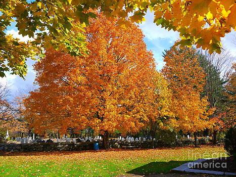 Beautiful New England Colors by Nancie DeMellia