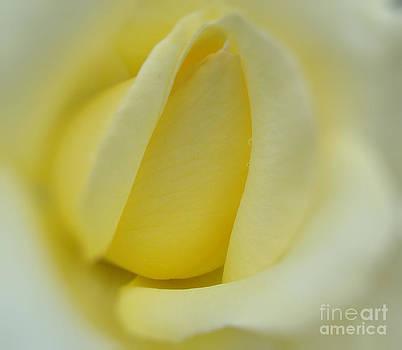 Andrea Kollo - Beautiful Rose