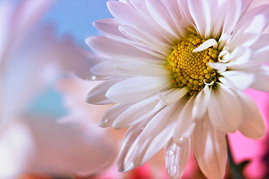 Beauty in Bloom by Tracey R Gates