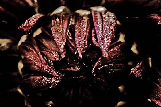 Beauty In Dark by Terrie Taylor