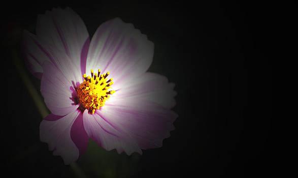 Beauty in Darkness by Amee Stadler