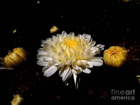 Beauty of Nature by Hari Om Prakash