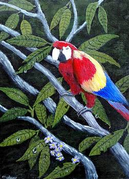 Beauty Of The Rainforest by Larry Cirigliano