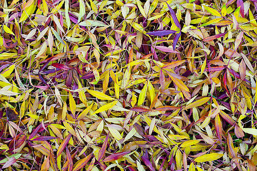 Steven Poulton - Bed of Willow leaves