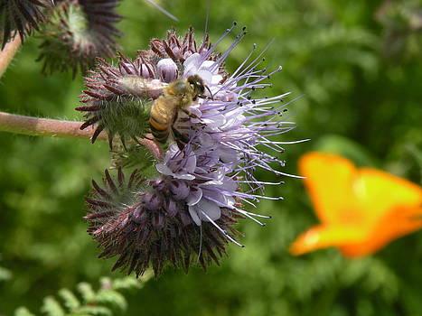 Bee by Andrea Cullinane