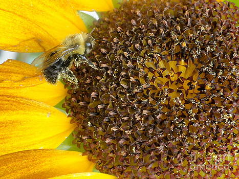 Bee Business by Trish Hale