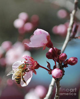 Heather Kirk - Bee in a Blossom