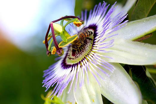 Diana Haronis - Bee on a Nigella