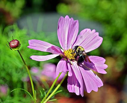 Bee on Flower by Susan Leggett