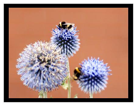 Bee Tree by Sherry Fain