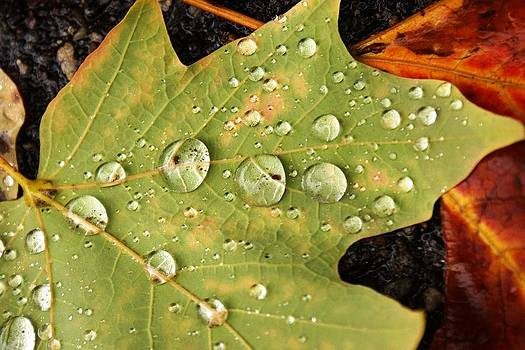Bejeweled leaves by Matthew Green