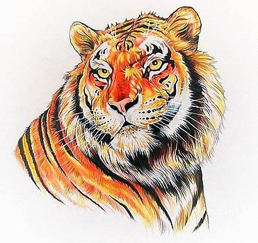 Bengal Tiger by Kimberlee  Ketterman Edgar