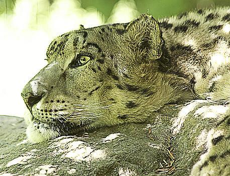 Big Cat by Yosi Cupano