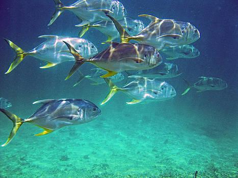 Big Fish by Kelly     ZumBerge