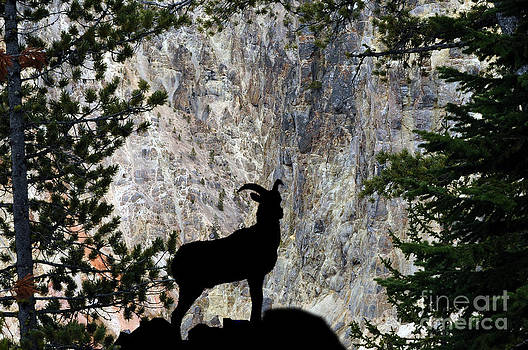 Dan Friend - Big horn sheep Silhouette