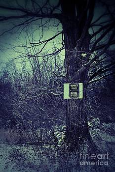 Sandra Cunningham - Big tree with sign in the woods