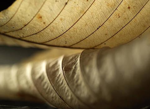 Birch Leaves by Mark Wagoner