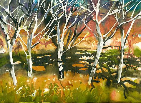 Birch trees by Jack Tzekov