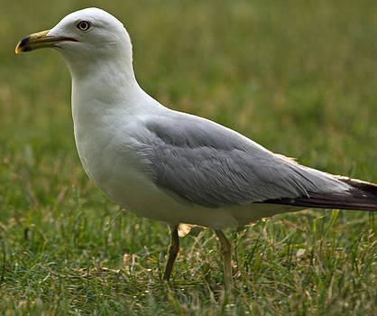 Bird by Amit Khanna