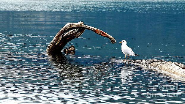 Bird And Log by Barry Shaffer