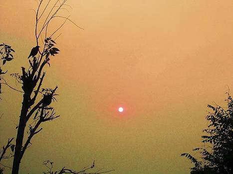 Bird And Sun by Jayvardhan Kandpal