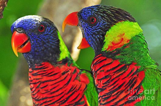 Bird Marriage by Susan Cliett