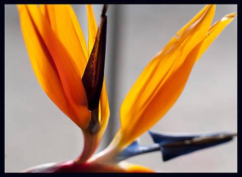 Bird of Paradise 4 by Sherry Fain