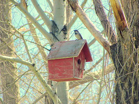 Bird on His House by Amy Bradley