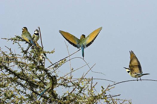 Michele Burgess - Birds in a Bush
