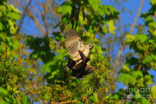 Bird's Mating in Flight by Curtis Brackett