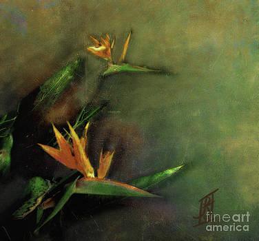 Rosy Hall - Birds of Paradise