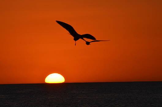 Birds over sunset by Susan McNamara