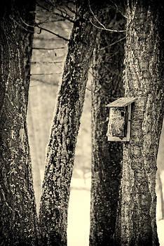 Birds Refuge.. by Al  Swasey