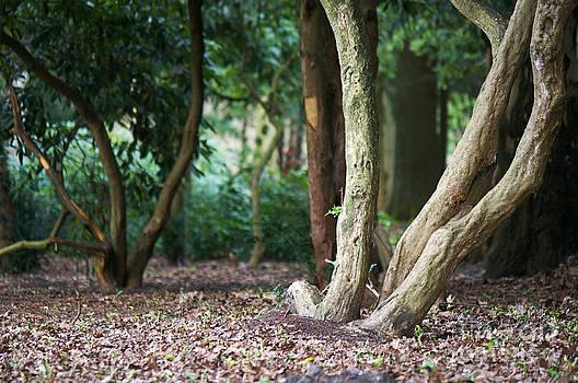 Angela Doelling AD DESIGN Photo and PhotoArt - Bizarre trees