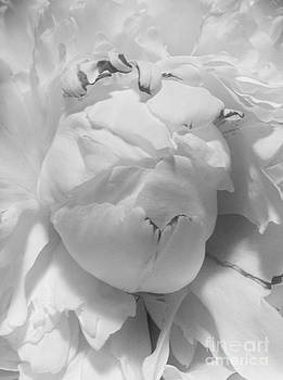 Black and White Study 5 by Caroline Ferrante