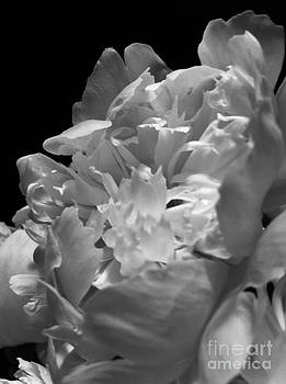 Black and White Study 6 by Caroline Ferrante