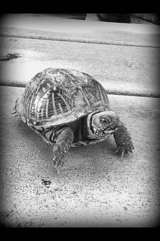 Black And White Turle by Emma Sechrest