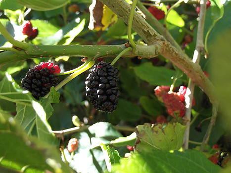 Black Berries by Heather Jett