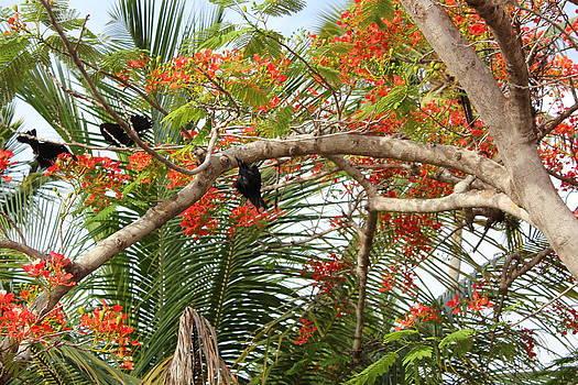 Black Birds In Paradise by Felix Zapata