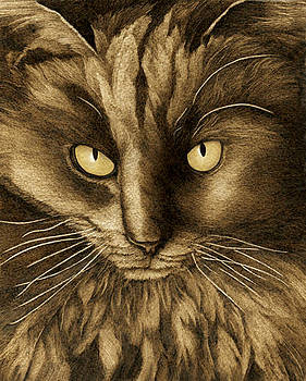 Black Cat by Cate McCauley