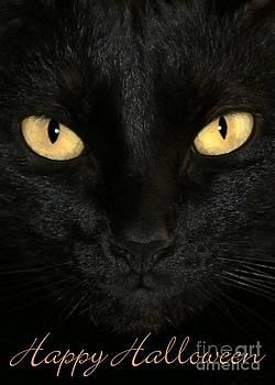 Sabrina L Ryan - Black Cat Halloween Card